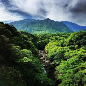 KUROMI DAKE Bäume grün Berge