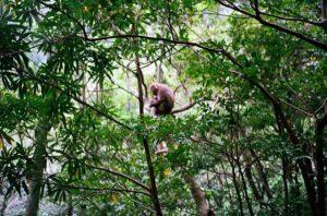 Forrest Monkey Wald Affe