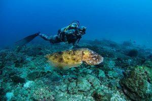 diving tauchen schnorcheln